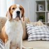 Advantages of in-home pet care